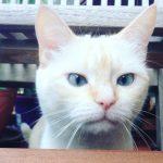 Problemas de comportamiento gatos