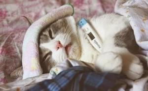 gato enfermo