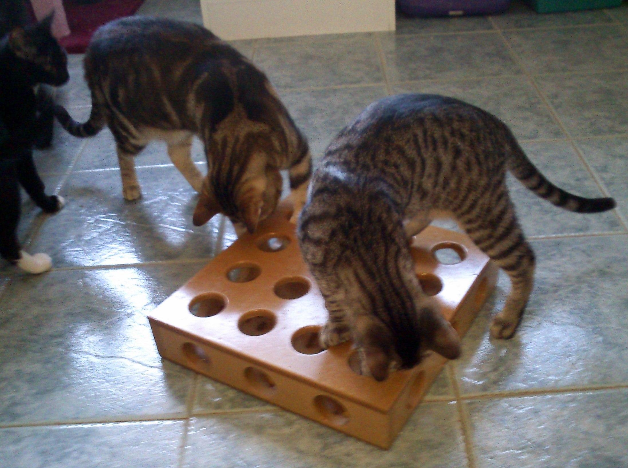 Compartiendo hogar con un gato cu les son sus necesidades - Cazar ratones en casa ...