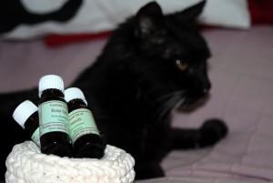 Zoopharmacognosis gatos