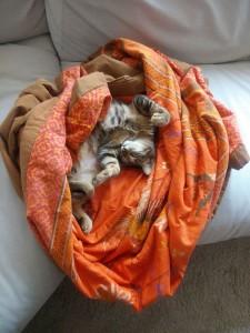 gato mimoso, sociable