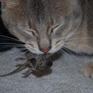 mouse_kill